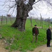 I terreni della Mionetto