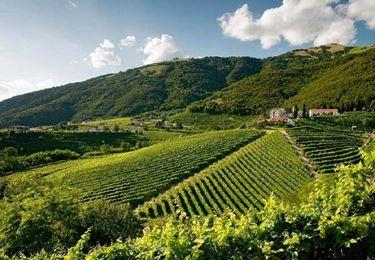 Le terre in cui vengono coltivati i vitigni del prosecco
