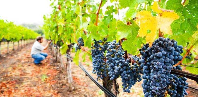 <h6>Costo uva da vino</h6>Il costo delle uve da vino varia in base a molti fattori, a partire da quelli climatici fino a quelli determinati per legge dalle classificazioni e categorie delle denominazioni di origine.
