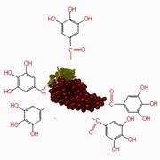 Polifenoli uva