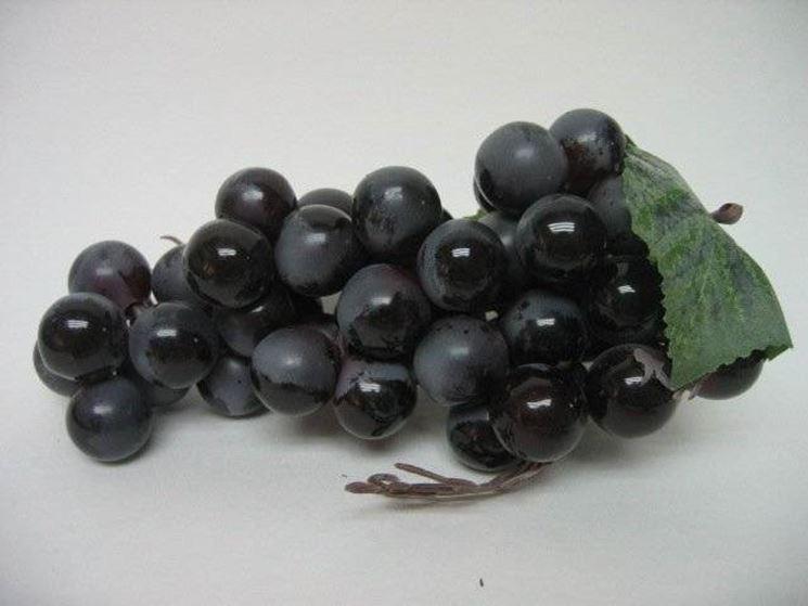 uva nera