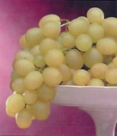 Variet uva da tavola uva - Vivai rauscedo uva da tavola ...