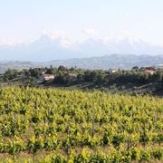 area vinicola