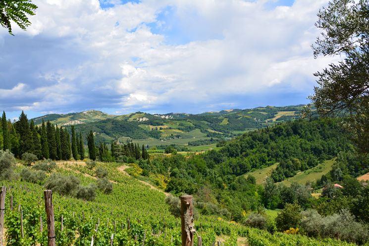 l'area vinicola