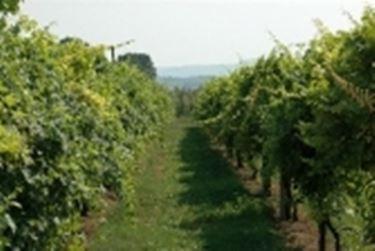 Vitigni in Romagna