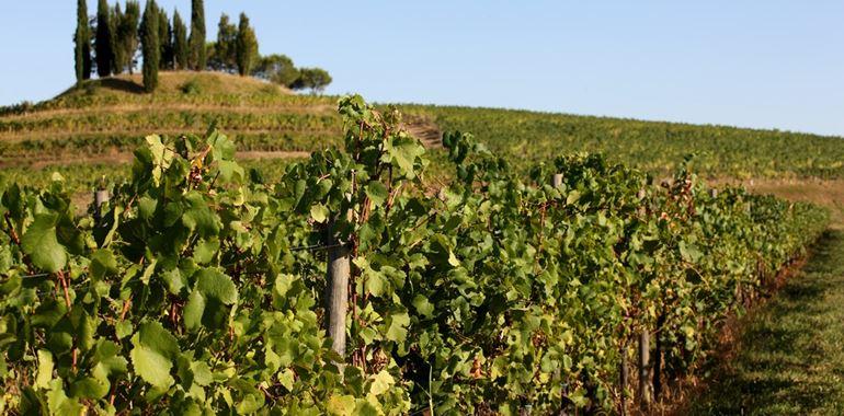 Friuli Annia