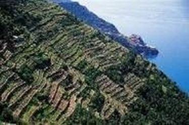 Gli spettacolari terrazzamenti delle Cinque Terre