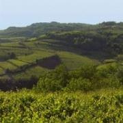 Le colline di Gambellara