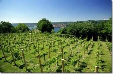 Vino rosso lombardia
