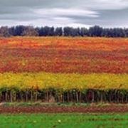 http://www.cibo360.it/images/WG/produttori/vini_tipici_DOC_molise.jpg