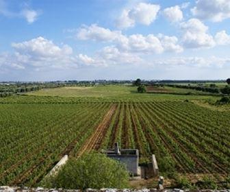 Vino rosso pugliese