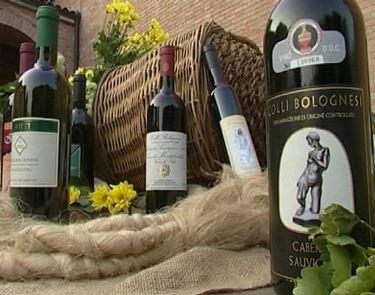 http://www.conipiediperterra.com/wp-content/uploads/2010/10/vino-colli-bolognesi.jpg