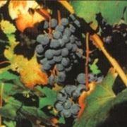 http://www.parmagourmet.it/immagini/vino2.jpg