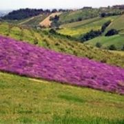 http://aziende.agraria.org/img_aziende/montepiano-9748_1.jpg