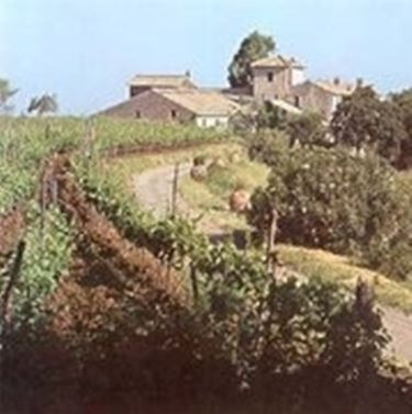 vigne nel Lazio