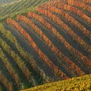 http://www.wineblog.it/wp-content/2009/09/canale-vino-enoteca-regionale-roero.jpg