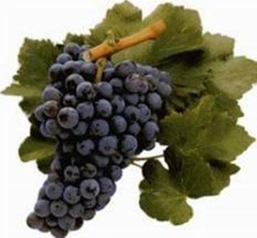 l'uva Cannonau