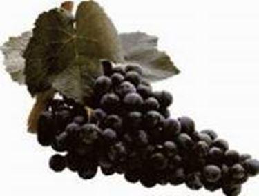 L'uva principe della zona, il Carignano