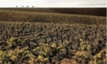 Le vigne sulle colline di Alcamo