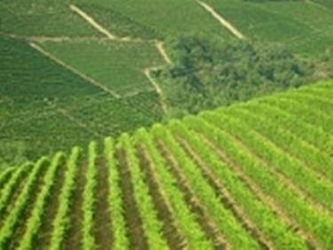 I vitigni in autunno