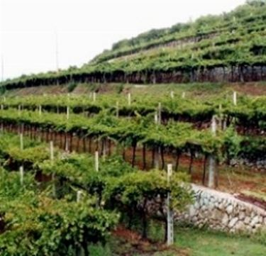 Le marogne, i terrazzamenti realizzati con muri a secco per la coltivazione della vite in Valpolicella